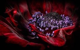 Macrophotographie de fleurs de pavot rouge, pistil
