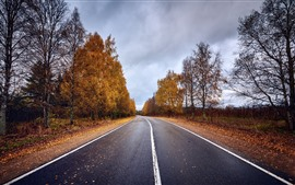 Road, trees, autumn, dusk