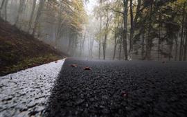 Estrada, árvores, nevoeiro