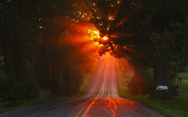 Road, trees, sun rays, fog, morning