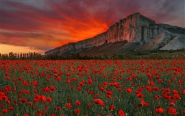 Russia, Crimea, red poppies, mountains, sky, clouds, sunset