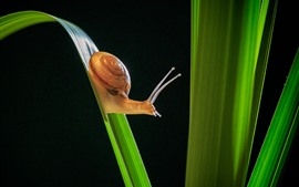 Snail, insect, green grass, black background