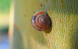 Preview wallpaper Snail macro photography, tree
