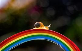 Preview wallpaper Snail walk on rainbow bridge