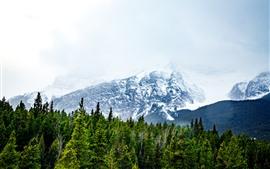 预览壁纸 雪山,森林,雾
