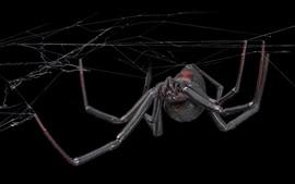 Aranha, web, fundo preto