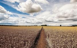Preview wallpaper Summer, fields, clouds, sky