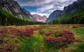 Preview wallpaper The Dolomites, Alps, mountains, forest, grass, wildflowers