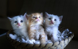 Preview wallpaper Three cute kittens, basket, black background