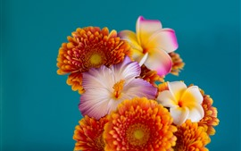Preview wallpaper Three kinds flowers, gerbera, plumeria, hibiscus