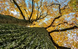 Preview wallpaper Tree, bottom view, trunk, yellow leaves, autumn