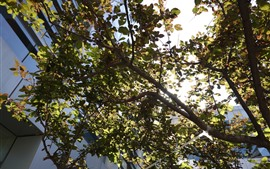 Árvore, folhas, galhos, luz solar