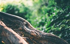 Tronco de árvore, fundo verde