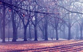 Деревья, скамейка, листья, осень, солнечные лучи, парк