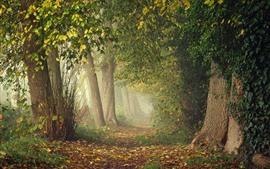 Arbres, forêt, sentier, feuilles