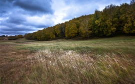Preview wallpaper Trees, grass, wind, clouds, autumn