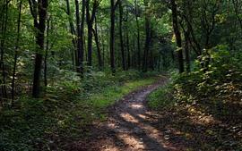 Árboles, sendero, bosque, naturaleza.