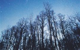 Vorschau des Hintergrundbilder Bäume, sternenklarer, blauer Himmel