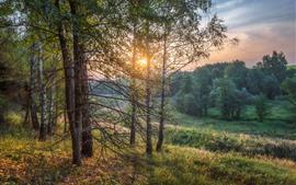木々、太陽の光、朝