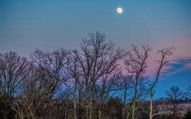 Árvores, galhos, lua, noite