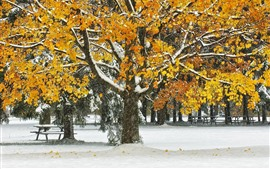 Preview wallpaper Trees, yellow leaves, snow, winter, park