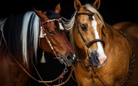 Preview wallpaper Two brown horses, friends