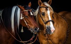 Dois cavalos marrons, amigos
