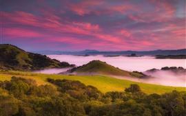 Eua, montanhas, árvores, nevoeiro, amanhecer