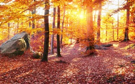 Preview wallpaper Ukraine, Carpathians, trees, autumn, golden leaves, sun rays