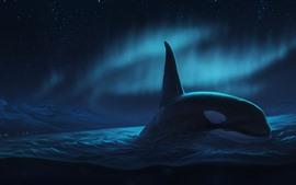 Кит, северное сияние, ночь, море, художественная фотография