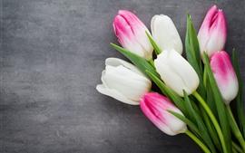 Pétalos de tulipanes blancos y rosas, flores, fondo gris.