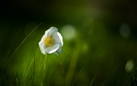 White flower, lonely, green background