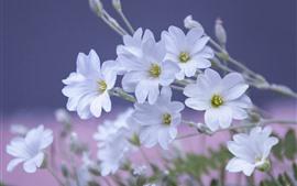 White petals flowers, spring