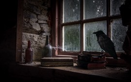Preview wallpaper Window, books, bottles, crow, rainy, dirt