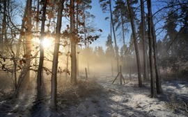 Winter, forest, trees, snow, sun rays, morning