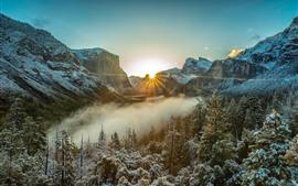 Inverno, manhã, nevoeiro, árvores, neve, raios de sol, montanhas