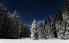 Winter, trees, snow, stars