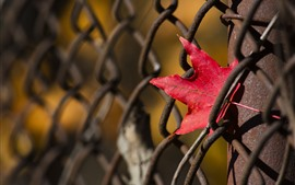Preview wallpaper Wire fence, red maple leaf