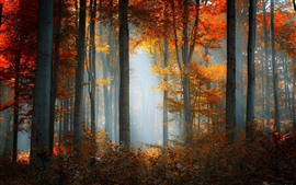 Autumn, forest, trees, yellow leaves, sun rays