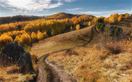 Autumn, trees, grass, slope, stones