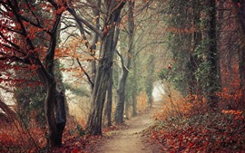 Autumn, trees, path, fog