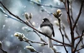 Pássaro, árvores, galhos, neve, inverno