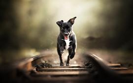 Cão preto correndo, ferrovia
