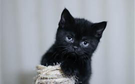 Black kitten, fluffy