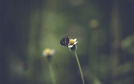 Preview wallpaper Black moth, flower, hazy background