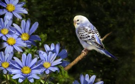 Preview wallpaper Blue flowers, parrot
