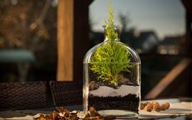 Botella, plantas, agua, naturaleza muerta.