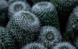 Aperçu fond d'écran Cactus, épines