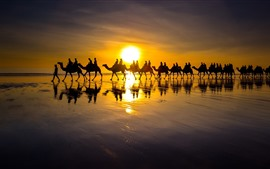 Preview wallpaper Camel, people, silhouette, lake, sunset