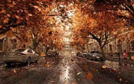자동차, 나무, 도로, 도시, 잎, 가을